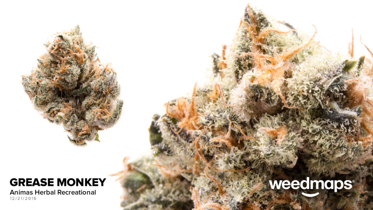 Our Strains - Prohibition HerbProhibition Herb